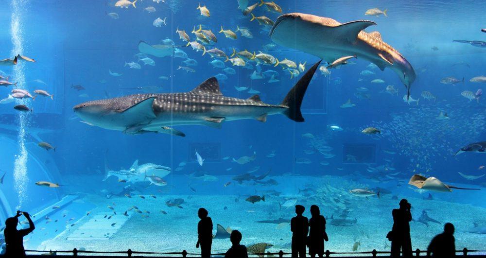 Várnai Akvárium