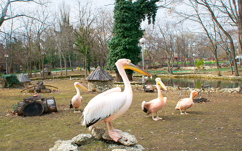 várna állatkert