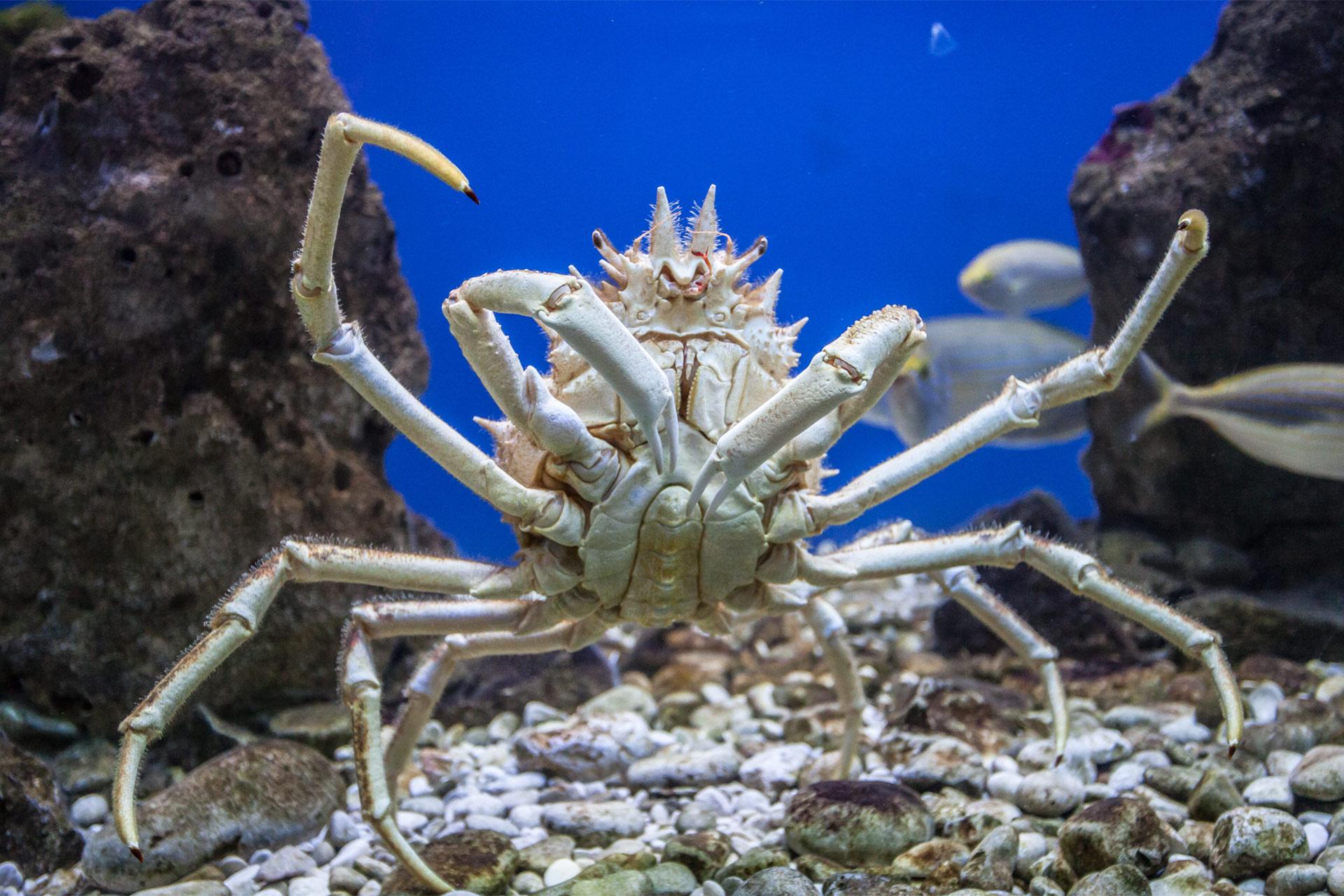 porec akvarium